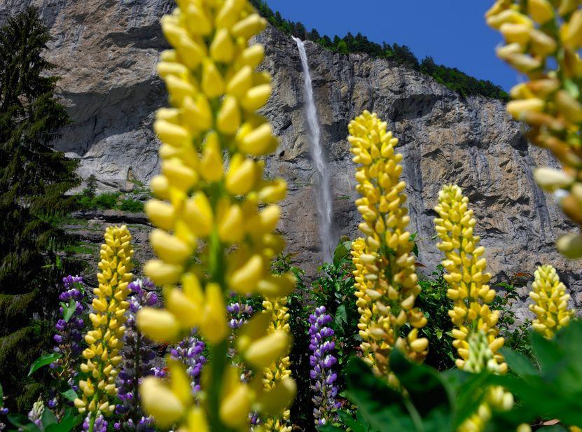 Die 300 Meter hohen Staubbachfälle im Lauterbrunnental