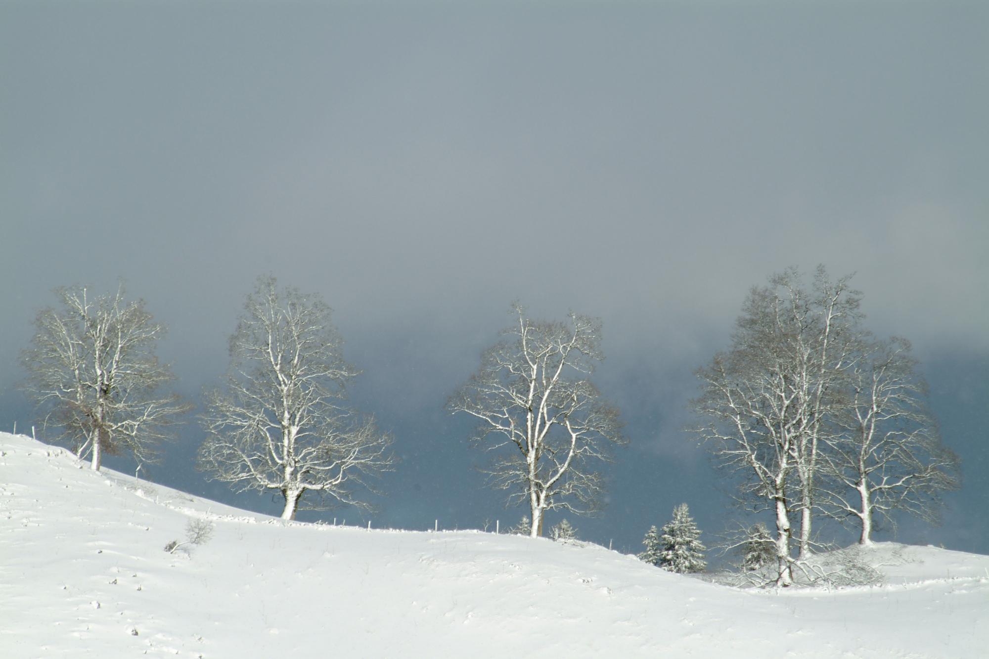 Winter im Berner Jura